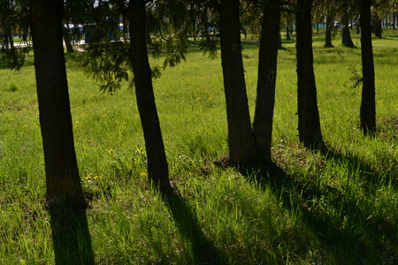 Long shadows from the trees in the early morning in the park in the summer Reklamní fotografie