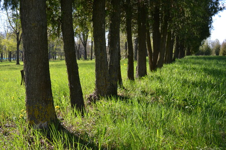 A row of trees in the park in the summer