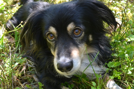 Black dog with brown eyes lying in the grass in the early morning Reklamní fotografie