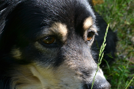 Black dog with sad eyes lying on the grass in the early morning Reklamní fotografie