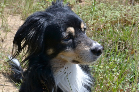 Black dog with shiny hair sitting on the lawn in the morning in the summer Reklamní fotografie