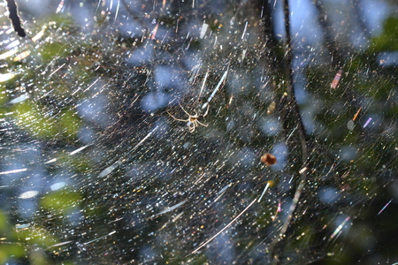 The spider in its web is brightly illuminated by the suns rays in the early morning in the summer Reklamní fotografie