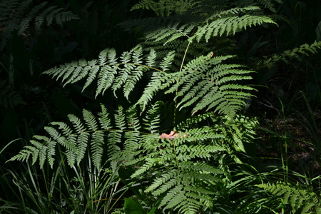 The fern in the forest is brightly lit by the sun in the early morning