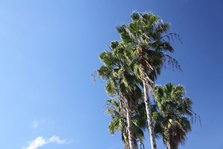 crown of the palm trees photo