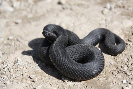 insidious:  snake Stock Photo