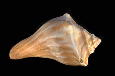 sea shell Reklamní fotografie