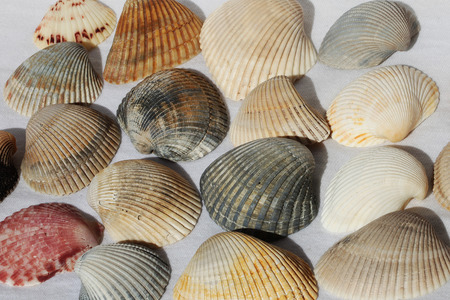 a sea shell on the white background