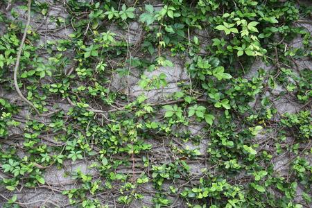 ancient limestone wall