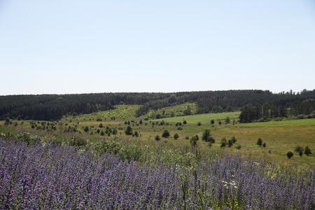 garden settlement: Ukrainian landscape