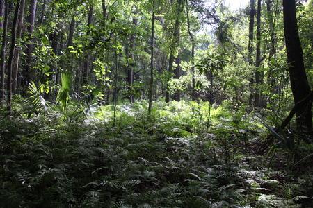 Florida forest Reklamní fotografie
