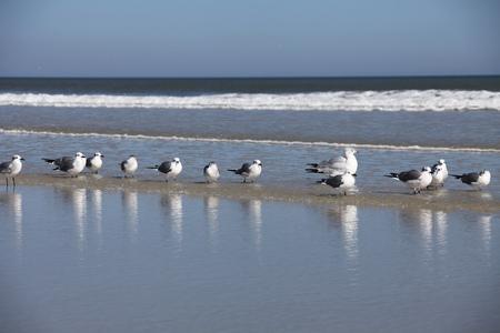 seagull Imagens
