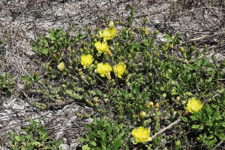 blooming: cactus blooming