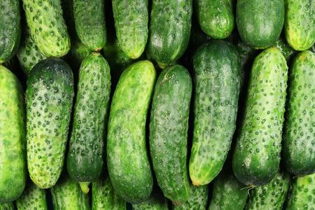 cucumbers: cucumbers background