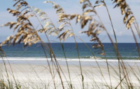 sea oats on a beach