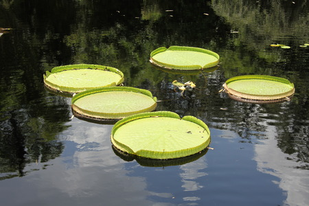 water plants on a surface of a river