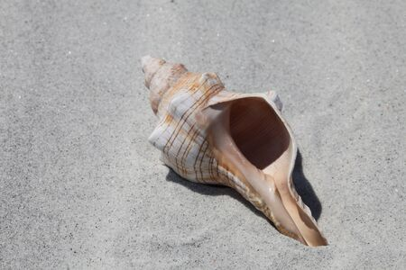Sea shell on Florida beach in the summer time