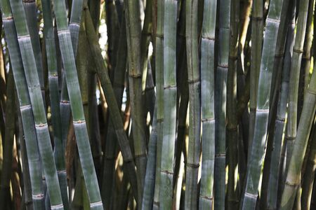 close view of the green bamboo stems