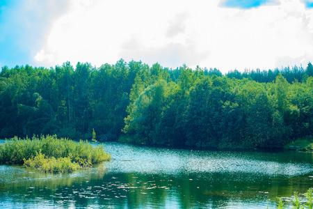 Overgrown pond. Stock Photo