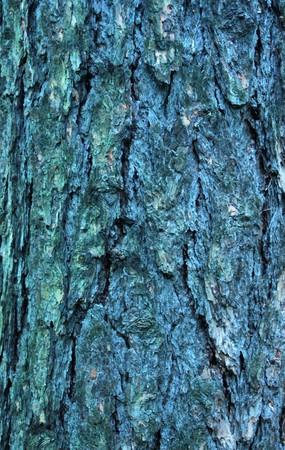Achtergrond textuur van boomschors, bos.