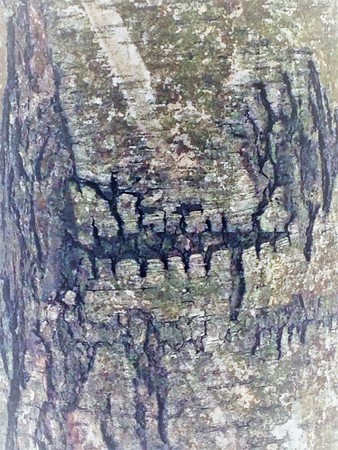 Just bark on a tree. Beautiful structural surface of the bark on different trees.