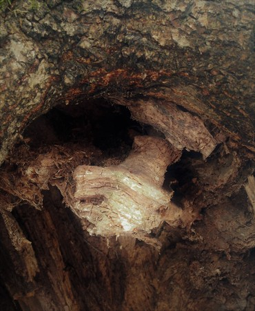 Just bark on a tree. Portrait of horror stories from other Parallels. The bark of the tree, the sculptor - the nature.