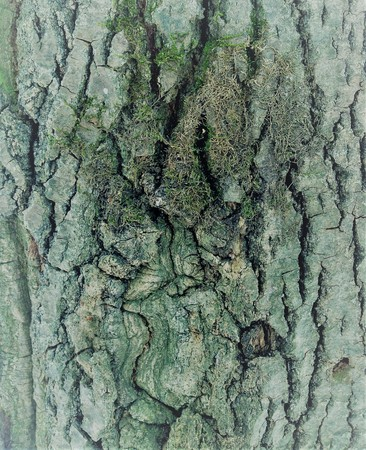 closeup photo of bark on a tree. Stok Fotoğraf