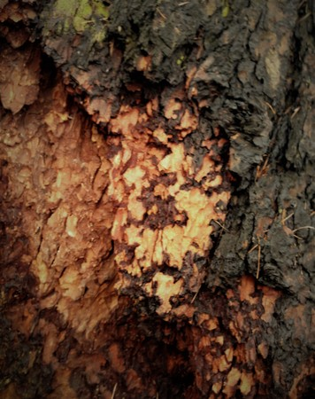 Just bark on a tree. The greatest artist is nature. Look at this photo from a distance and from different angles. You will see something quite unusual. Expressionism Abstractionism Surrealism Cubism Post-impressionism Stockfoto