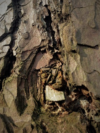 Simple bark on a tree. The greatest sculptor and artist is nature. The wonders of nature. Look at this photo from a distance and from different angles. You will see something quite unusual. Stock Photo