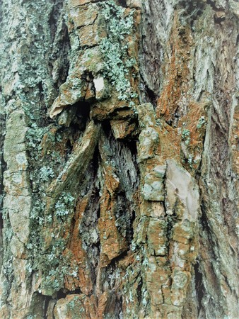 Simple bark on a tree. The greatest sculptor and artist is nature. The wonders of nature. Look at this photo from a distance and from different angles. You will see something quite unusual. Stok Fotoğraf