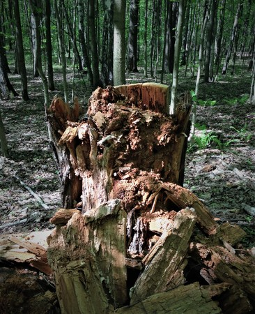 A rotten tree stump becomes a monster, a goblin, a troll, a pirate if the patches of light and shadow create the illusion.