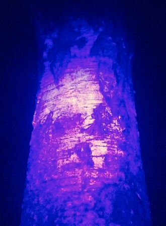 Background image of tree bark and roots. Coronavirus in UV. Nature itself comes up with such unusual paintings and sculptures, one must look at a distance, not bring it closer.