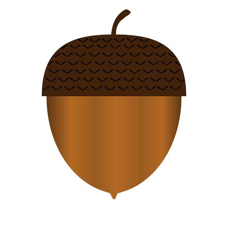 real acorn on white background