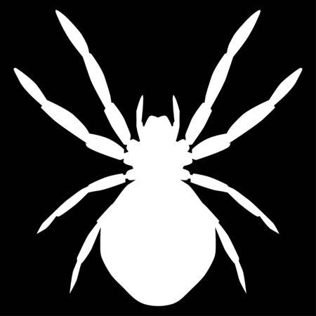 white spider on black background Illustration