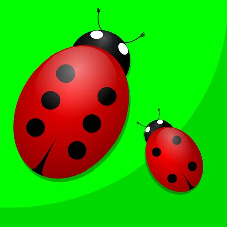 Two ladybugs on green background