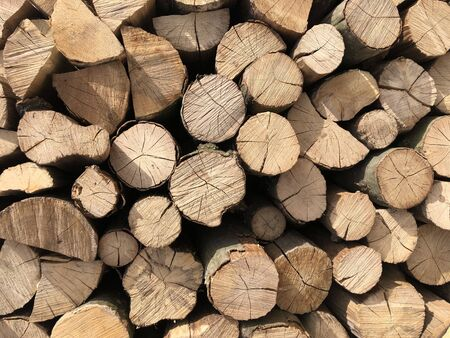 Natural wooden background. Pile of wood logs