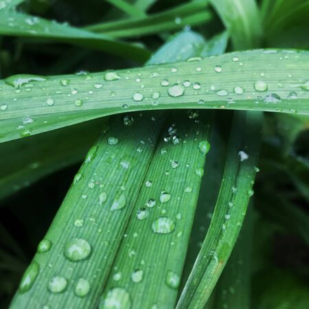 green natural grass background with water drops. focus. macro