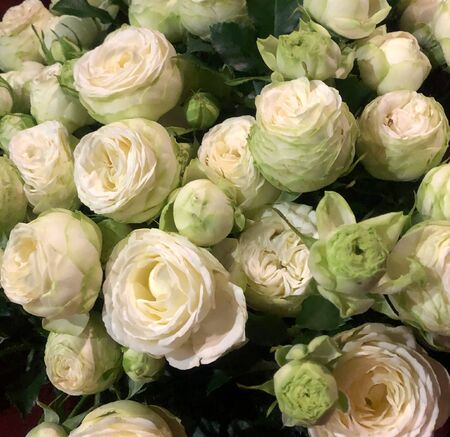 fun and Beautiful bouquet of white roses background Stockfoto