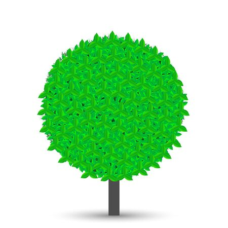 tree with green leaves isolated on white background with shadow