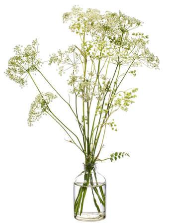 Conium maculatum (hemlock or poison hemlock) in a glass vessel with water