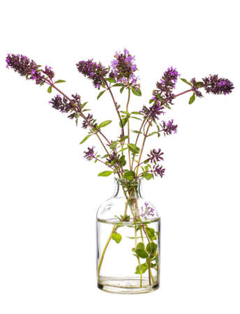 Oregano (origanum vulgare or wild marjoram) in a glass vessel with water