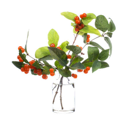 Lonicera tatarica (tatarian honeysuckle) in a glass vessel with water