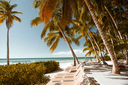 View through the palm trees of Saona Island to the Caribbean Sea