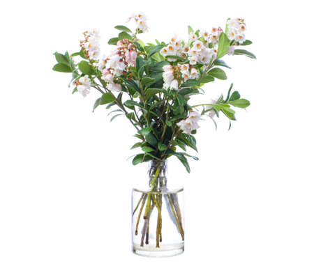 Blooming Vaccinium vitis-idaea (mountain cranberry or cowberry) in a glass vessel with water