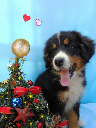 Puppy with its Christmas tree photo