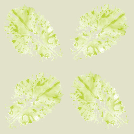 background with lettuce
