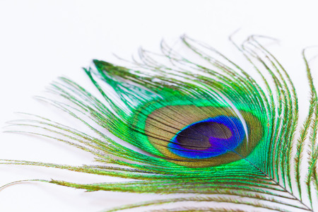 piuma di pavone: penna di pavone, macro