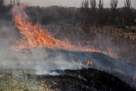 Spontaneous uncontrolled spread of fire in the reeds. Stock Photo