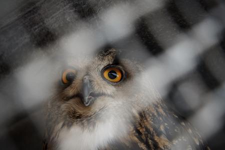 Beautiful impressive owl in the aviary.