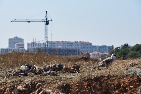 The seagull goes along the coast in the background of construction.