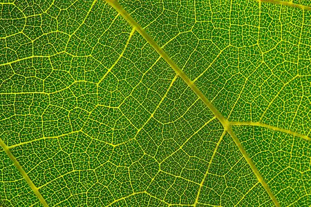 Background texture of green leaf. Macro photography of green leaf.